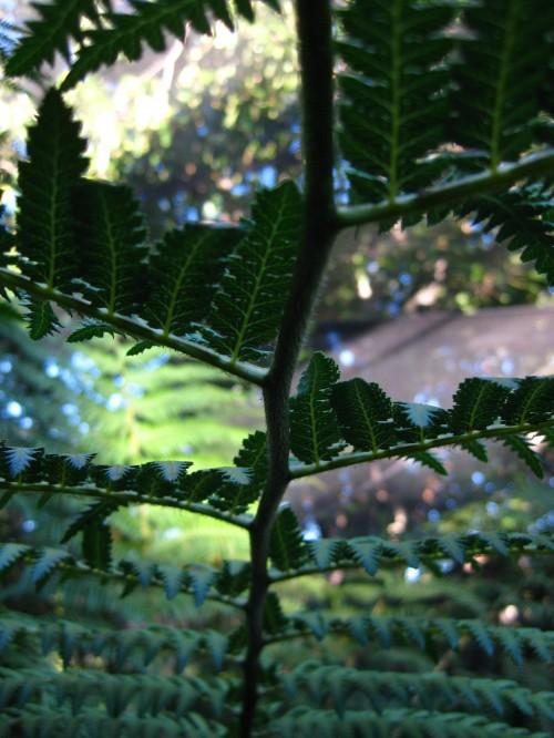 Macro shot of fern at Mt Coot-tha Botanic Gardens