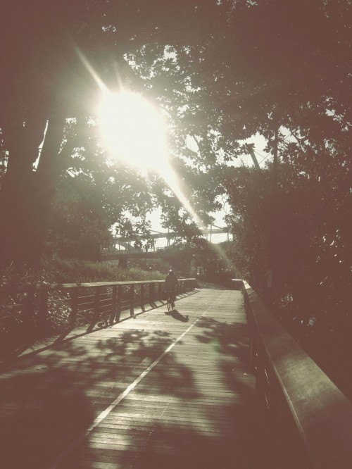 An overly edited photograph of a sun dappled walkway with the sun shining through tree branches. A bicyclist rides away from the viewer.