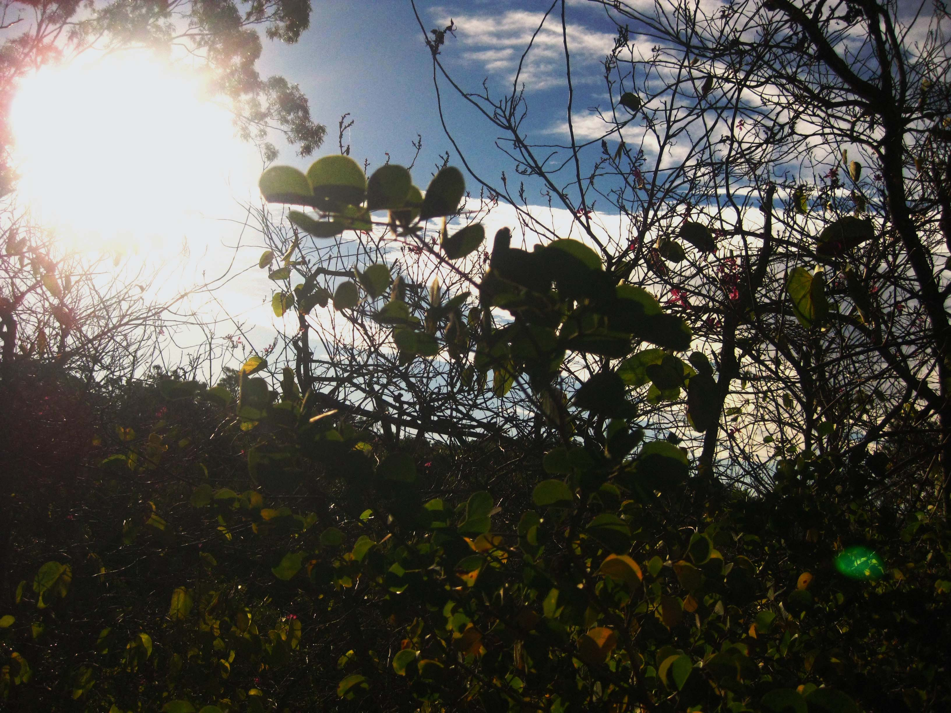 Photo of a tangle of bushes with the bright sun and blue sky coming through the leaves and branches.