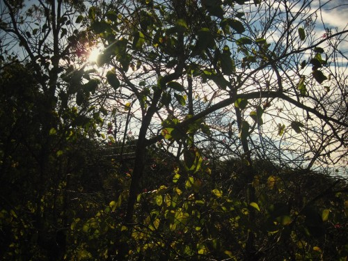 Photo of dark trees against a blue cloudy sky with the sun glaring through the branches.