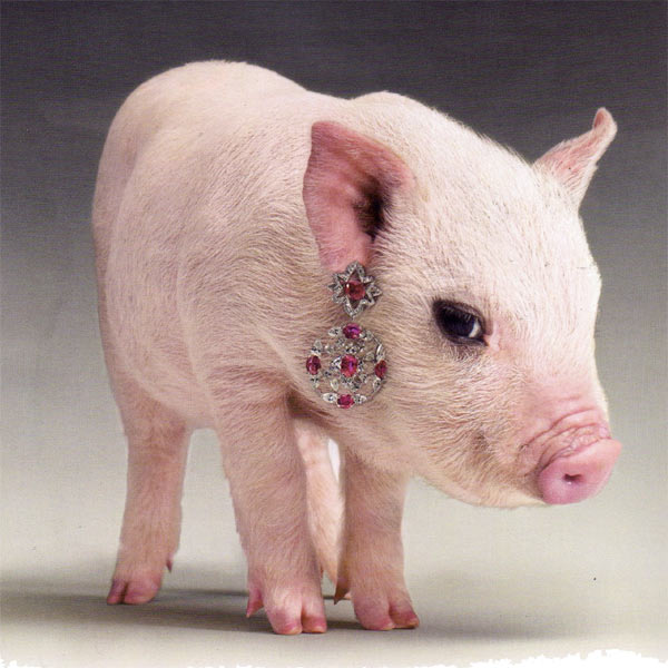 Photo of a tiny pink piglet with a fancy earring dangling from its ear. The earring is spangled with what looks like rubies and diamonds.