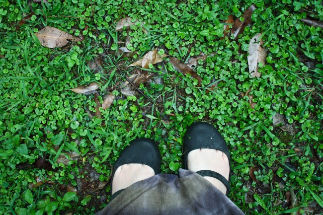 Photo of my feet in plastic mary jane crocs against really green damp grass.