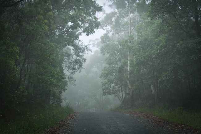 Photo of a road through mountain bushland that is full of white misty fog.