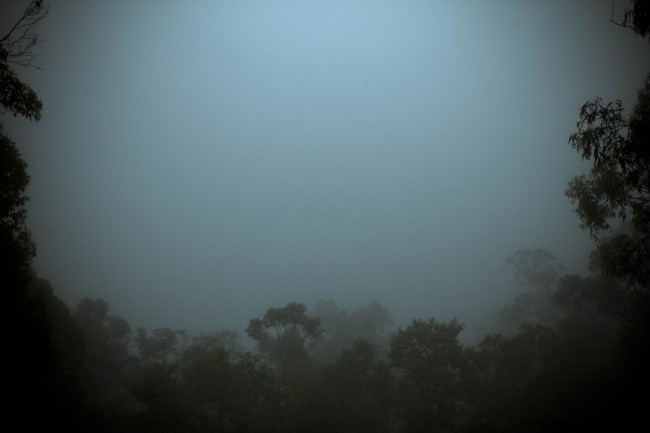 Photo of the view off a side of a mountain but it's obscured by thick white cloud. Silhouetted trees frame the bottom and sides of the photo.