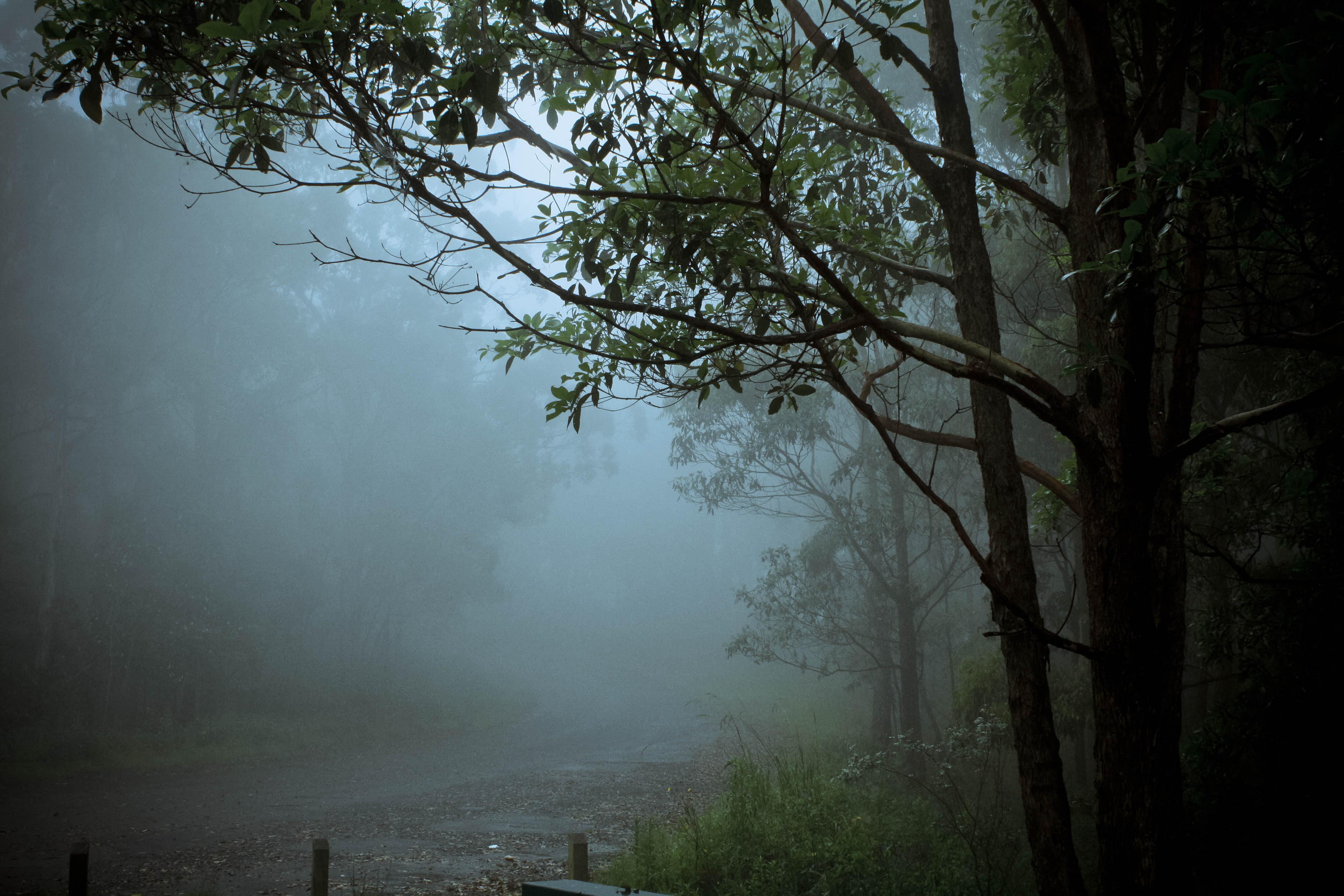 Photo of a very foggy road in the bush with silhouetted trees on the right hand side.