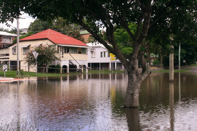 Photo of a flooded street. Houses now have a river frontage! A tree sits in the foreground, emerging from the water.