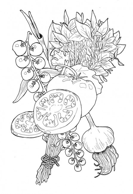 Cut Tomato Drawing a Pen Drawing of a Cut Tomato